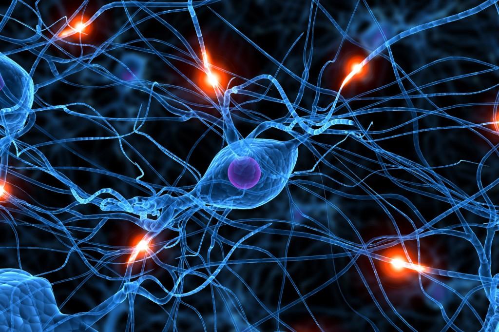 maghz 1024x681 - قدرت های شگفت مغز و ذهن را بشناسید