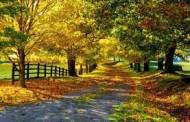 باز کردن چاکراها با لذت بردن از طبیعت