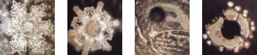 ساختار مولکولی آب