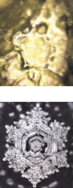 شکل 6 و 7 - تصویر بلورهای آب دریاچه فوجی وارا قبل از دعا ( شکل 6) تصویر بلورهای آب دریاچه فوجی وارا بعد از دعا ( شکل 7 )