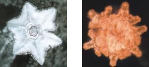 35 3 - تاثیر دعا بر ساختار مولکولی آب